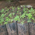 Plant sept 2011-05