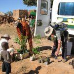 Plantation d'arbres à Ama